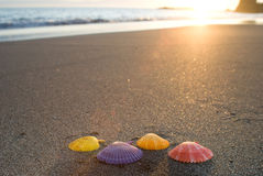 Noble scallop shell. On sandy beach at sunset Royalty Free Stock Photography