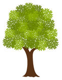 Noble tree Stock Photo