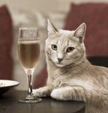 Nobler Elfenbeinaristokrat, der am Tisch mit einem Glas Wein sitzt Stockbild