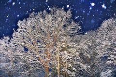 Noc śnieg Zdjęcie Royalty Free