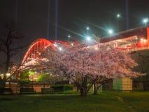 Noc Blossum i Kobe Ohashi Czereśniowy most fotografia stock