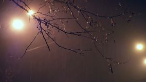 Noc deszczu gałąź światło zbiory
