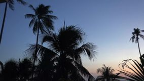 Noc i palmy zbiory