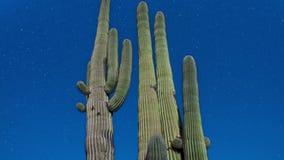 Noc kaktus z gwiazdami zbiory wideo