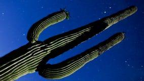 Noc kaktus z gwiazdami zbiory