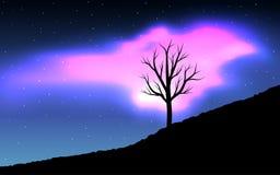 Noc krajobraz Suszę drzewo i menchii zorza royalty ilustracja