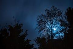 Noc krajobraz z sylwetkami drzewa i księżyc w pełni obrazy royalty free