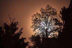 Noc krajobraz z sylwetkami drzewa i księżyc w pełni obrazy stock