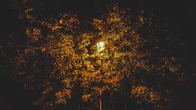 noc lekka ulica Zdjęcie Royalty Free