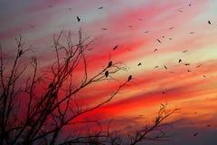 Noc ptaki Zdjęcie Royalty Free