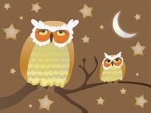 noc sowy Zdjęcie Stock
