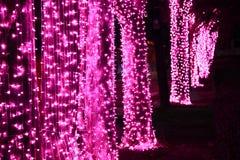 Noc strzał menchie zaświeca dekorację na drzewie obraz royalty free