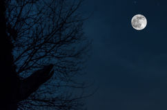 Noc tajemniczy krajobraz w zimnie tonuje przeciw księżyc w pełni na nocnym niebie, sylwetki nagie gałąź jak wilkołak Obraz Royalty Free