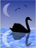 Noc wizerunek - sylwetka łabędź na wody powierzchni z odbiciem księżyc Obraz Stock