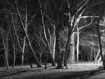 Noc zaświecający jesienny las Zdjęcia Royalty Free