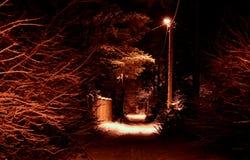noc zima ulicznych chodzących krajobrazowi ludzie Rozjarzony lamppost iluminuje snowed gałąź drzewa i drogę zdjęcie stock