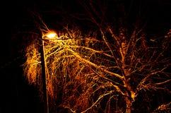 noc zima ulicznych chodzących krajobrazowi ludzie Rozjarzony lamppost iluminuje snowed gałąź drzewa i drogę zdjęcia stock