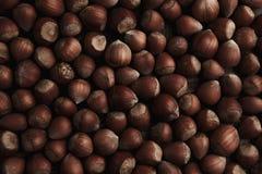 nocciola Nocciola organica fresca Macro fondo matto fotografia stock