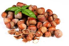 Nocciole Nuts Immagini Stock