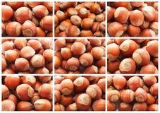 Nocciole o dadi della nocciola Fotografia Stock