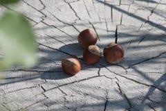 Nocciole su un ceppo Fotografia Stock Libera da Diritti