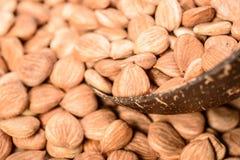 Noccioli di albicocca Fotografie Stock Libere da Diritti