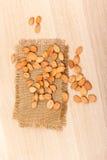 Noccioli di albicocca Fotografie Stock
