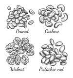 Noce, anacardio, pistacchio ed arachide Fotografia Stock