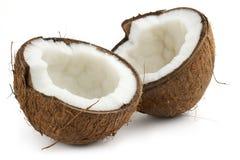 Noce di cocco Fotografia Stock