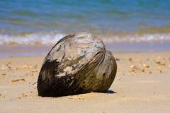 Noce di cocco Immagini Stock Libere da Diritti