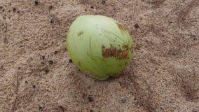 Noce di cocco abbandonata Immagine Stock