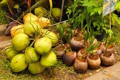 Noce di cocco arometic del tiro Fotografia Stock Libera da Diritti