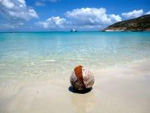 Noce di cocco asciutta sulla spiaggia Immagini Stock Libere da Diritti