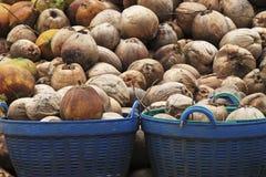 Noce di cocco in cestino Immagine Stock