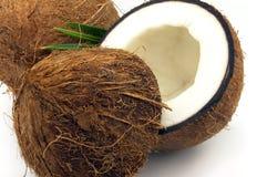 Noce di cocco con i fogli Immagine Stock