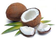 Noce di cocco con le foglie Immagini Stock Libere da Diritti
