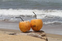 Noce di cocco dalla spiaggia fotografia stock