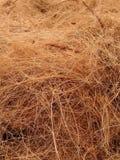 Noce di cocco della fibra Immagine Stock Libera da Diritti