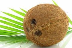 Noce di cocco della frutta con le foglie Immagini Stock Libere da Diritti