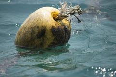 Noce di cocco di galleggiamento Fotografia Stock Libera da Diritti