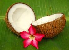 Noce di cocco e fiore di plumeria Fotografie Stock Libere da Diritti