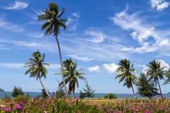Noce di cocco e flora di fioritura Fotografia Stock