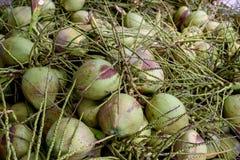 Noce di cocco e ramo Fotografia Stock Libera da Diritti