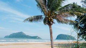 Noce di cocco e spiaggia Immagini Stock