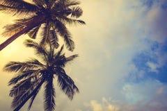 Noce di cocco (effetto d'annata elaborato immagine filtrato ) immagine stock libera da diritti