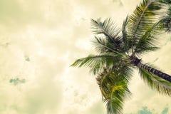 Noce di cocco (effetto d'annata elaborato immagine filtrato ) fotografia stock libera da diritti