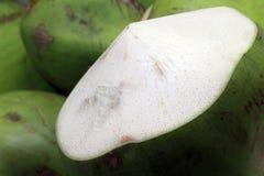 Noce di cocco fresca da un albero Fotografia Stock Libera da Diritti