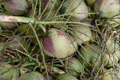 Noce di cocco grezza Fotografie Stock Libere da Diritti