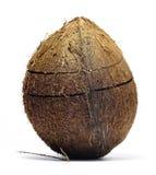 Noce di cocco incrinata Fotografia Stock Libera da Diritti