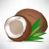 Noce di cocco incrinata ed intera noce di cocco Immagini Stock Libere da Diritti